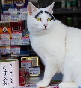 纪实72小时 传说中的赐福猫与商业街